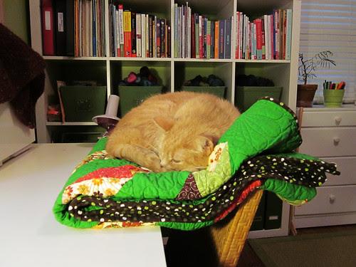 nuku's new napping hammock