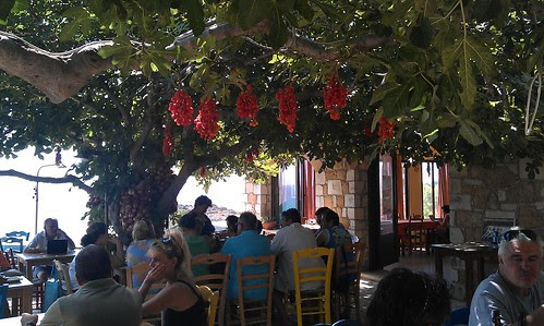 tomatoes and onions drying under the fig and mulberry trees