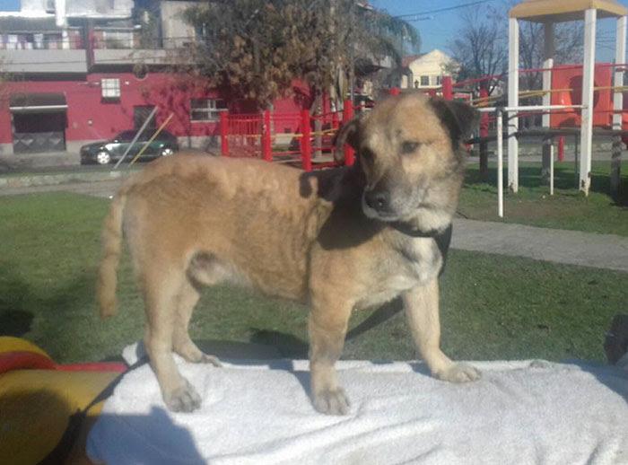 two-boys-save-dog-covered-tart-petro-argentina-16