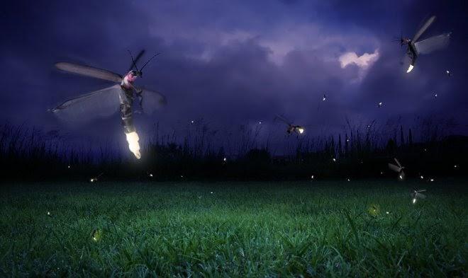 Светлячки научились применять «музыкальную броню» против летучих мышей