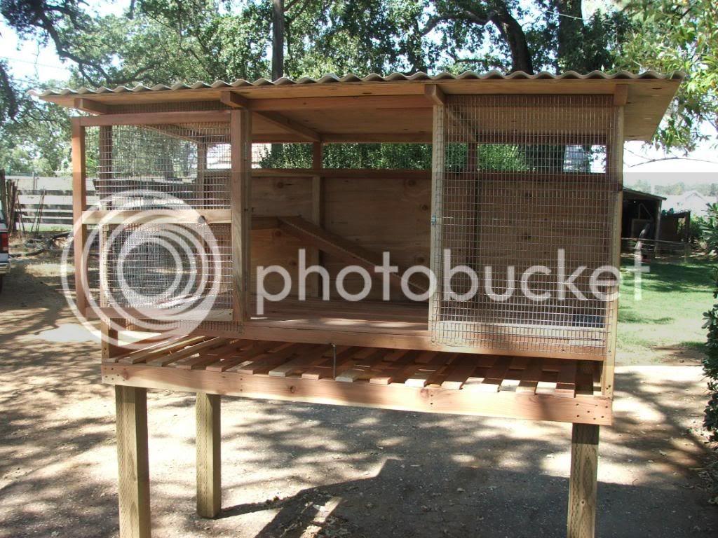 Flemish Giant Rabbit Cage - photo#8