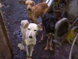 Cães vítimas de maus tratos, em Caruaru, Agreste de Pernambuco (Foto: Divulgação/ Ascom Gerência de Proteção Animal)