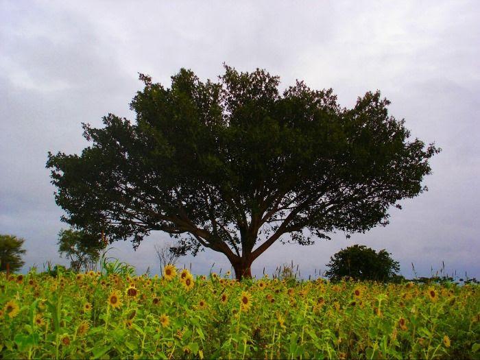 Nilgiri Range Coonoor for newlyweds to enjoy some peaceful moments