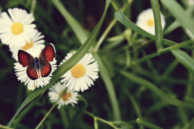 August 27, 2010: butterfly kisses