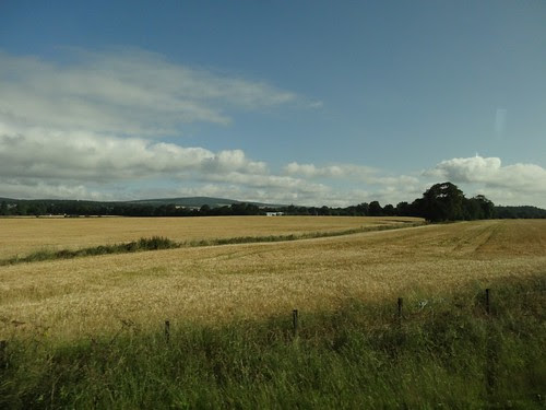 Grain fields in Scotland