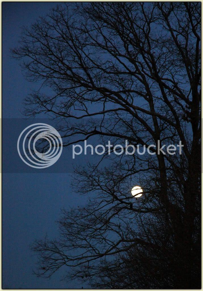 Full Moon 020809