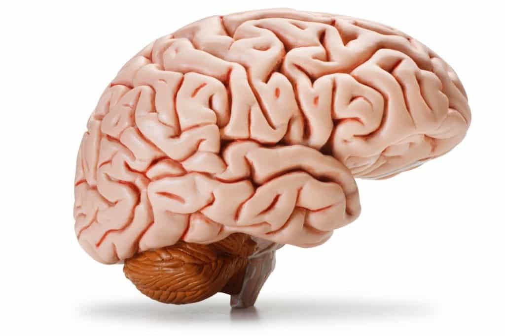 Gs notes on human brain for ssc cgl mts cpo exam 2017 human brain ccuart Images