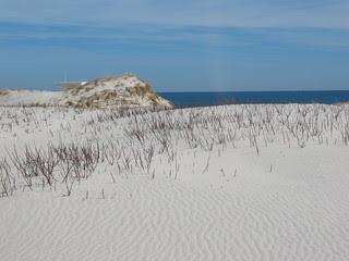 Island Beach State Park - dunes