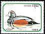 Harlequin Duck Histrionicus histrionicus