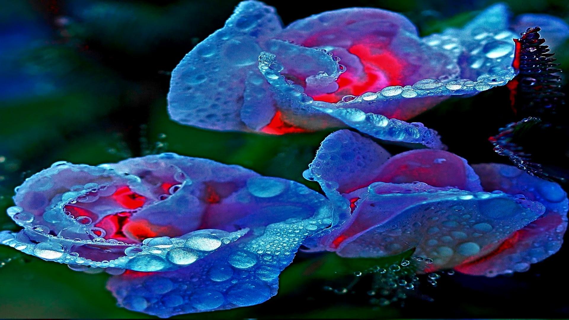 3D Love Images Hd 13 Cool Wallpaper  Hdlovewall.com