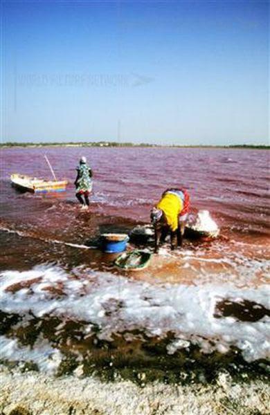 Ροζ λίμνη στη Σενεγάλη (17)
