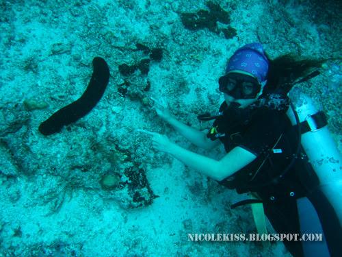 giant sea cucumber 2