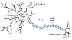 Hasil gambar untuk gambar Blokir saraf