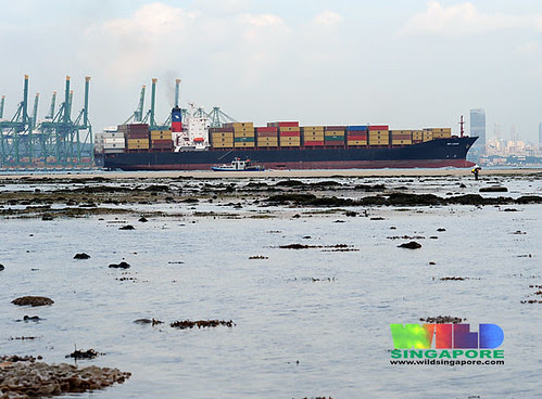 Container ship off Cyrene Reef