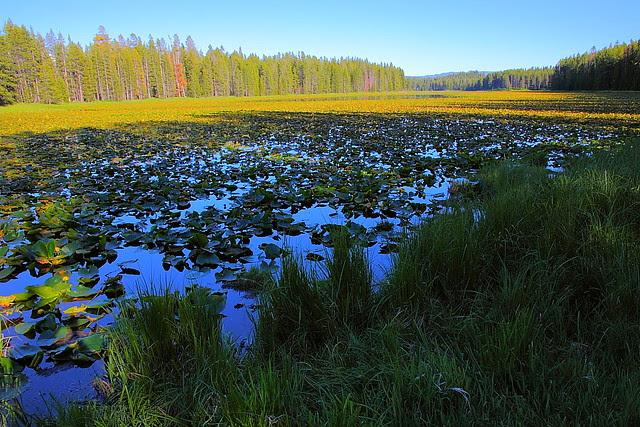 IMG_7935 Swan Lake