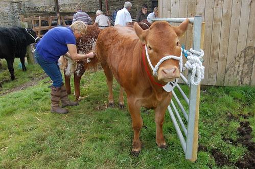 Bowes Agricultural Show Sept 12 (10)