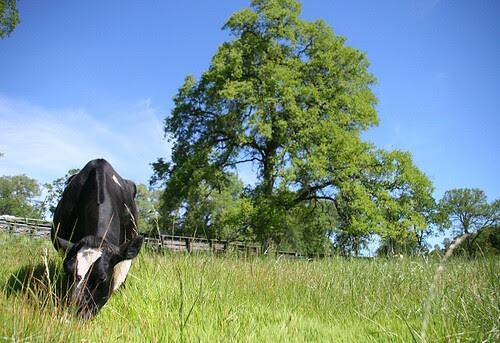 Maddie enjoying new pasture