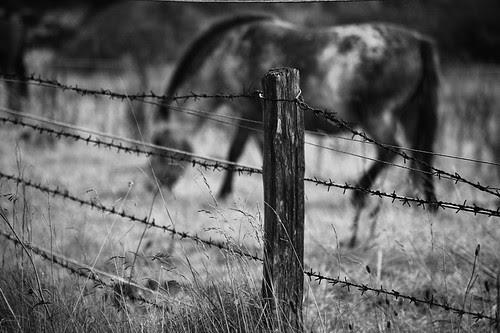 365 days | 274 | horses