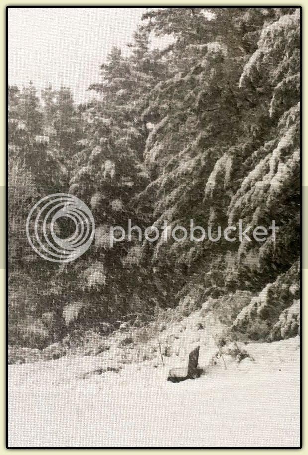 Connecticut Snow