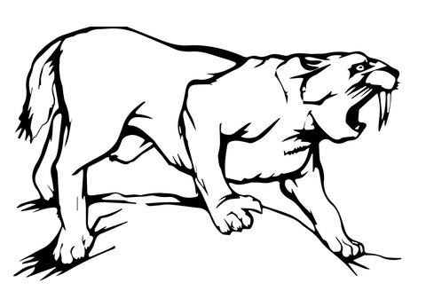 Dibujo De Tigre Dientes De Sable Para Colorear Dibujos Para