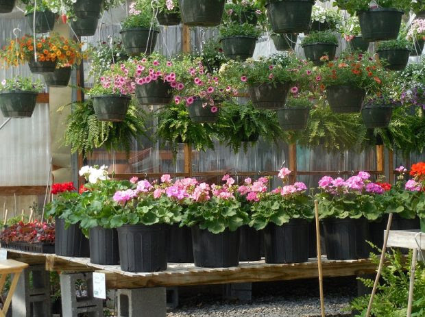 Top Reasons to Buy Your Plants Online