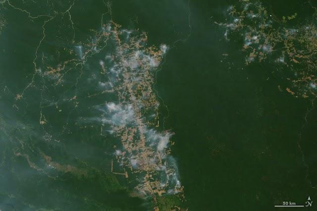 Amazon Forest On Fire 2019 (NASA Satellite Data)