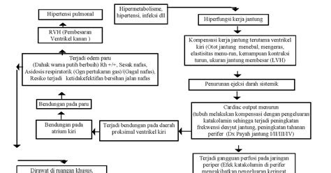 pathway hard heart failure hhf oedema paru  gagal