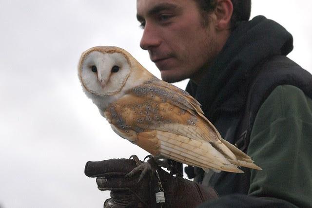 DSC_5414 Barn Owl