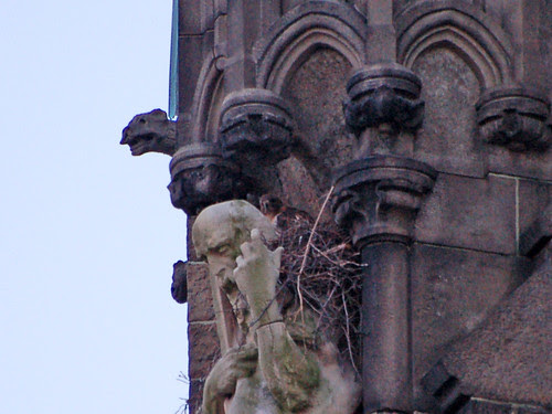 Red-Tailed Hawk in Cathedal Nest