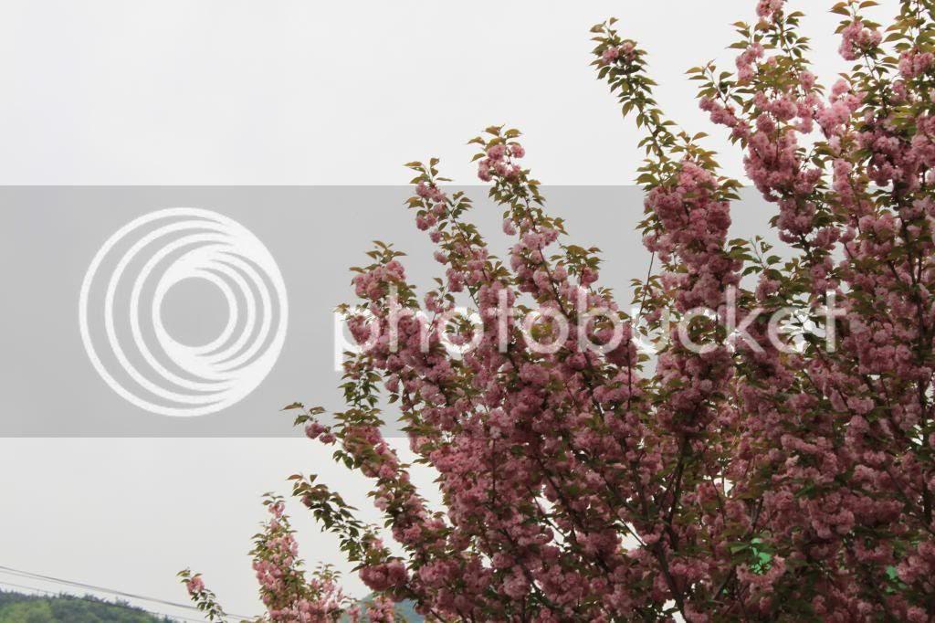 photo IMG_1356.jpg