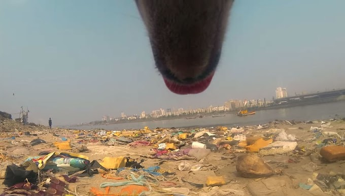 Stray Dog 'Films' His Cruel Life In Republic of India With A Go professional during this Powerful biological group Campaign