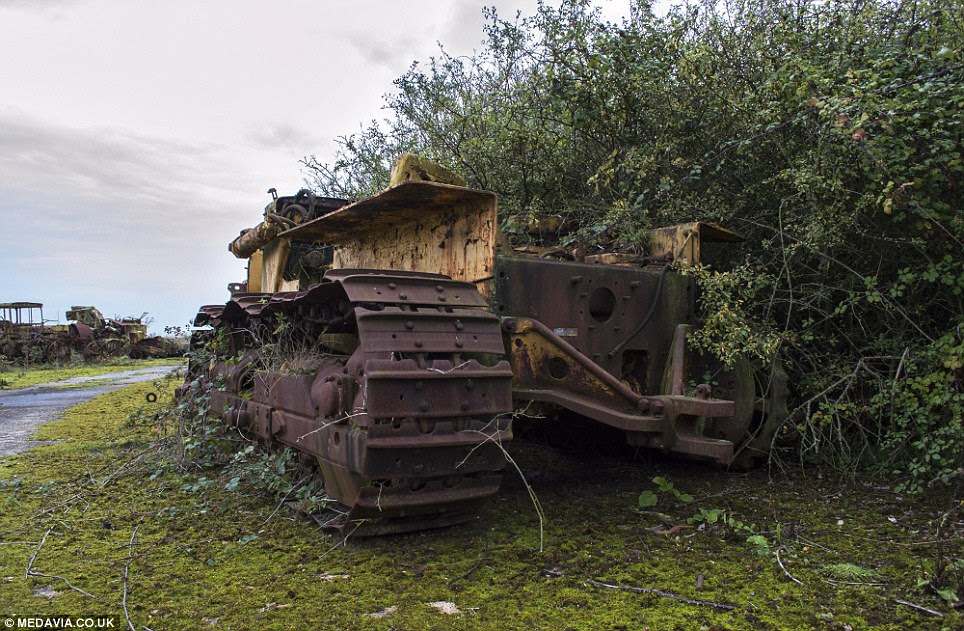 Taken by nature: This bulldozer has been swallowed up by a bush while plants have grown in its tracks over the decades it has lay there untouched