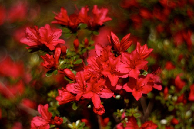 spring (red ii)