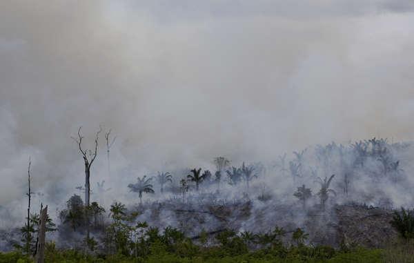 Las llamas han devorado ya casi la mitad de la selva Arariboia.