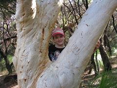 Tree Hugger Lilly
