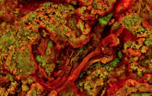Encuentran sangre en un hueso de dinosaurio de hace 75 millones de años