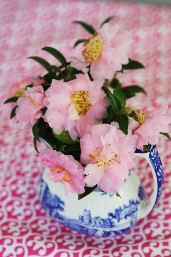 pink flowers in blue jug