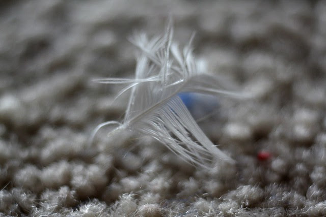 a tiny feather