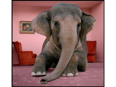 http://careersi.files.wordpress.com/2009/05/elephany.jpg