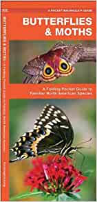 Montana Butterflies Moths A Folding Pocket Guide To Familiar Species Pocket Naturalist Guide Series
