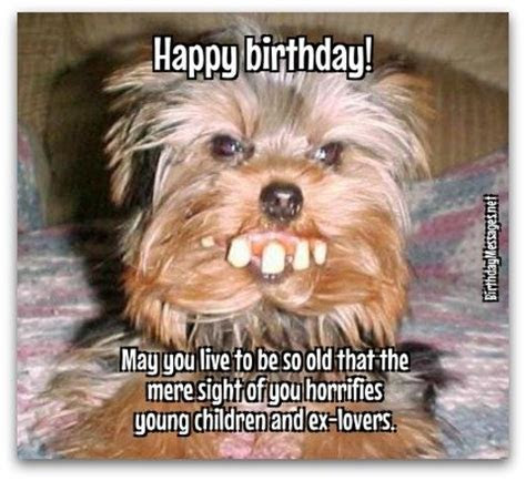 Download Free 170 Funny Birthday Wishes for Adults   The