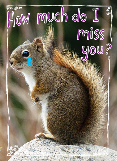 Funny Miss You Card How Much From Cardfoolcom