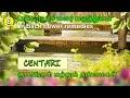 டாக்டர் பாச் மலர் மருத்துவம் - Dr Bach flower remedies - Centari Flower