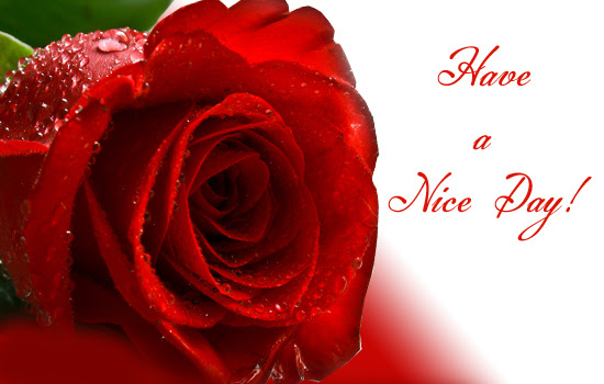 Have A Nice Day With This Rose Free Have A Great Day Ecards 123