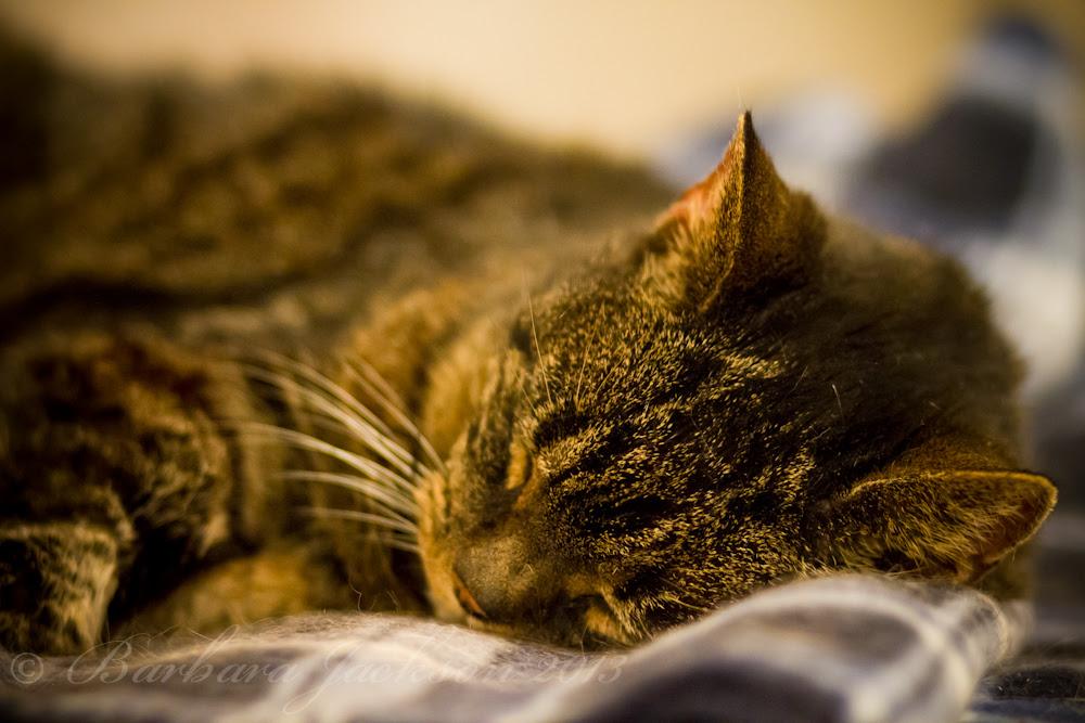 Pod asleep