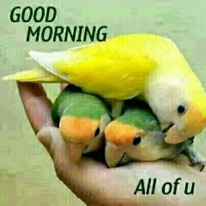 Good Morning All Of You Pictures Photos And Images For Facebook
