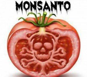 monsanto-evil-tomato