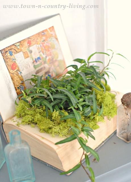 How to make a book planter