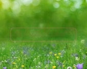 5ftx5ft Spring Meadow Vinyl Photography Backdrop - Creativebackdrops