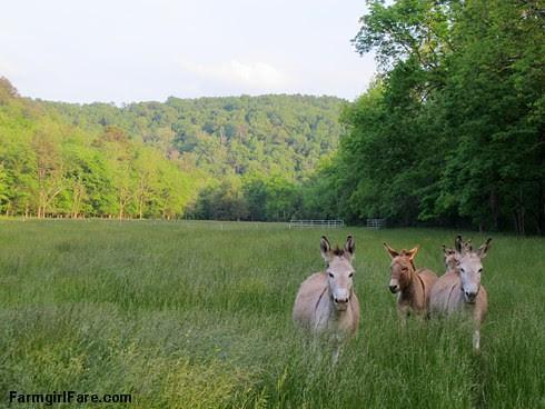 (28-7) Tall grass in Donkeyland - FarmgirlFare.com